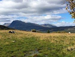 Tisleifjorden rundt Golsfjellet