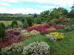 Golubieński Ogród Botaniczny