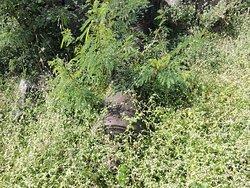 Forte, tomado pelo mato,não parece mas tem um canhão no meio do mato