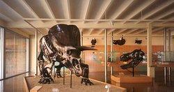 Institut Catala de Paleontologia Miquel Crusafont