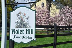 Violet Hill Bed and Breakfast