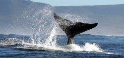 Two Oceans Cape Tours