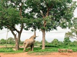Grassroot Tours Ghana