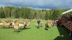 Skullaryd Moose Park