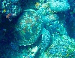 Super Dive Center