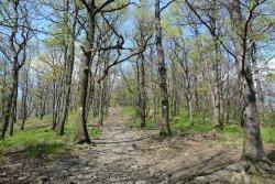 Sleza Landscape Park