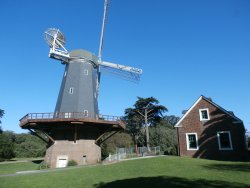 Golden Gate Park Windmills & Tulips