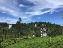 Why live anywhere when got a place in Tea Gardens