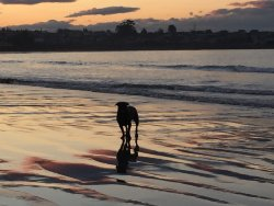 Caroline Bay Beach
