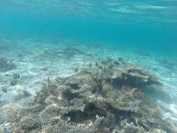 Unterwasserwelt vor dem Lux Le Morne