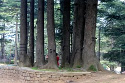 Trees all around