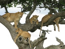 Jambo Serengeti Adventure Safaris