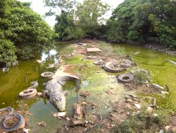 ‪Teritip Crocodile Farm‬