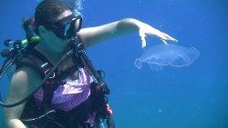 Casa del Mar Scuba Diving