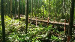 Matang Mangrove Forest Reserve, Kuala Sepetang