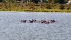 Lake Naivasha Sopa Resort