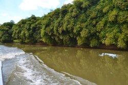 Parque Nacional Humedales del Ozama(Ozama Wetlands National Park)