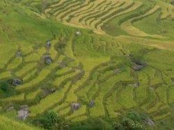 Jin Zhu Zhuang Nationality Village