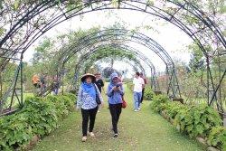 Kebun Mawar Garut