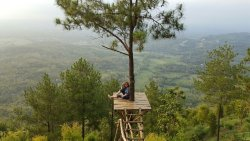 Becici Pine Peak