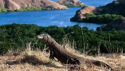 Komodo Tour Booking