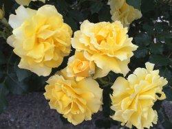 Odawara Flower Garden