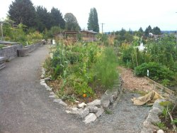 Beacon Hill Food Forest
