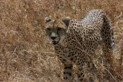 Simba Safaris Day Tours