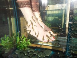 Ruthi's Fish Spa