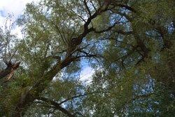 Ellwood H. May Environmental Park