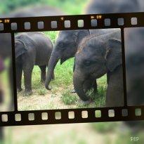 大象生态公园