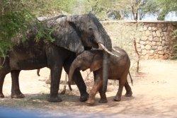 Une famille d'éléphants à l'accueil