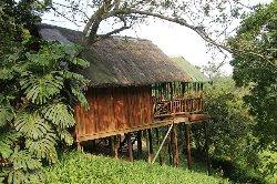 Tree House River Lodge