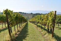 Montioni Frantoio e Cantina