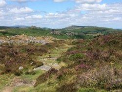 Dartmoor's Daughter