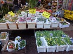 De Plantenmarkt