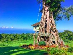 Lupe Sina Treesort
