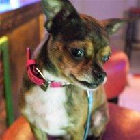 Nikko Mussolini Dog Boutique and Spirits