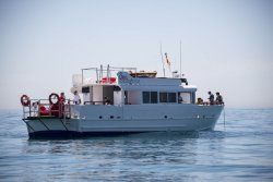 Sea Experience Boat Parties