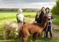 Larks Edge Alpacas