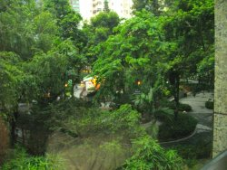 Hollywood Road Park from one of our windows