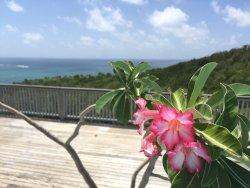Sweet Dream by Antigua chiama Italia