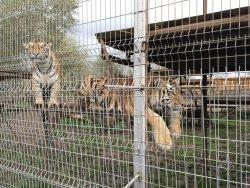 Mini Zoo