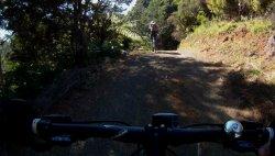 Pauanui Trail