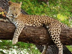 Bundi Ramgarh wild life sanctuary