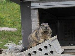 Marmot's Paradise