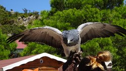 Garden of Eagles (Jardin de Las Aguilas)