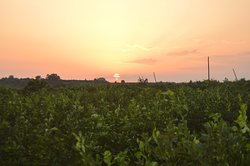 Agriturismo Orange Park