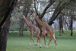 Best experience at Kenya