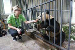 China Highlights Panda Keeper